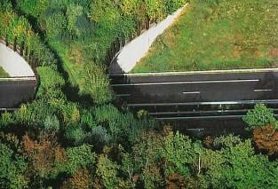 Bosques y puentes | Autopistas