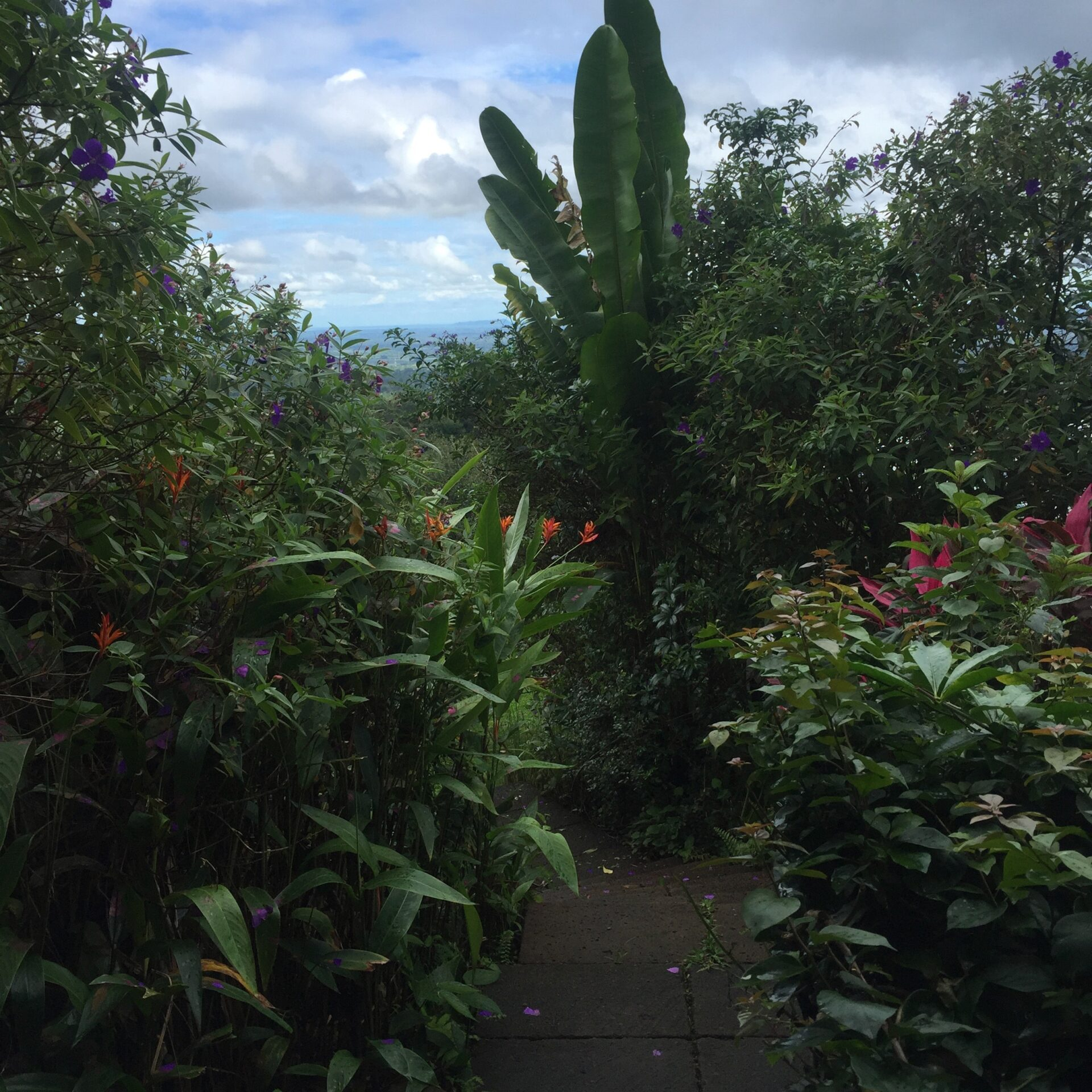 paisajismo Upala Costa Rica