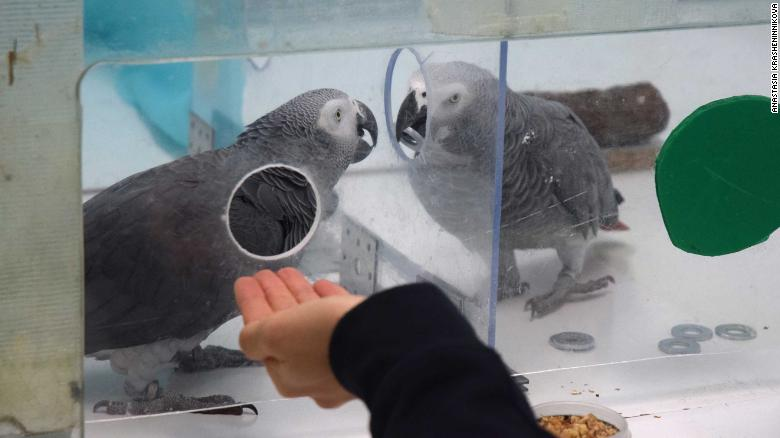 papagaios espaco das aves estudo