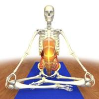 Bandhas para iniciantes: Introdução às contrações no Yoga