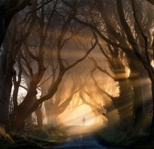 The Road From King's Landing: Dark Hedges, Northern Ireland
