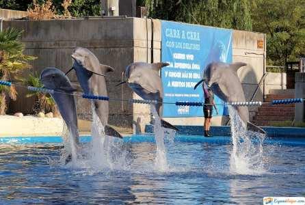 delfines zoo aquarium madrid