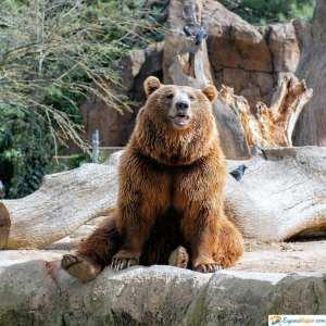 oso zoo madrid