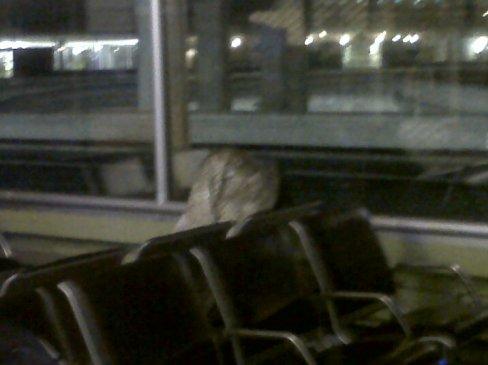 Esta flaqui estuvo ridículamente tapada toda la noche. Yo pensé que era equipaje, ¡hasta que vi que se movía!