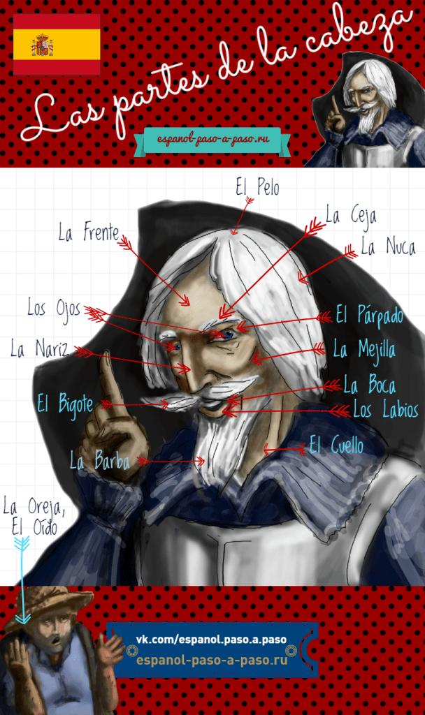 las partes de la cabeza