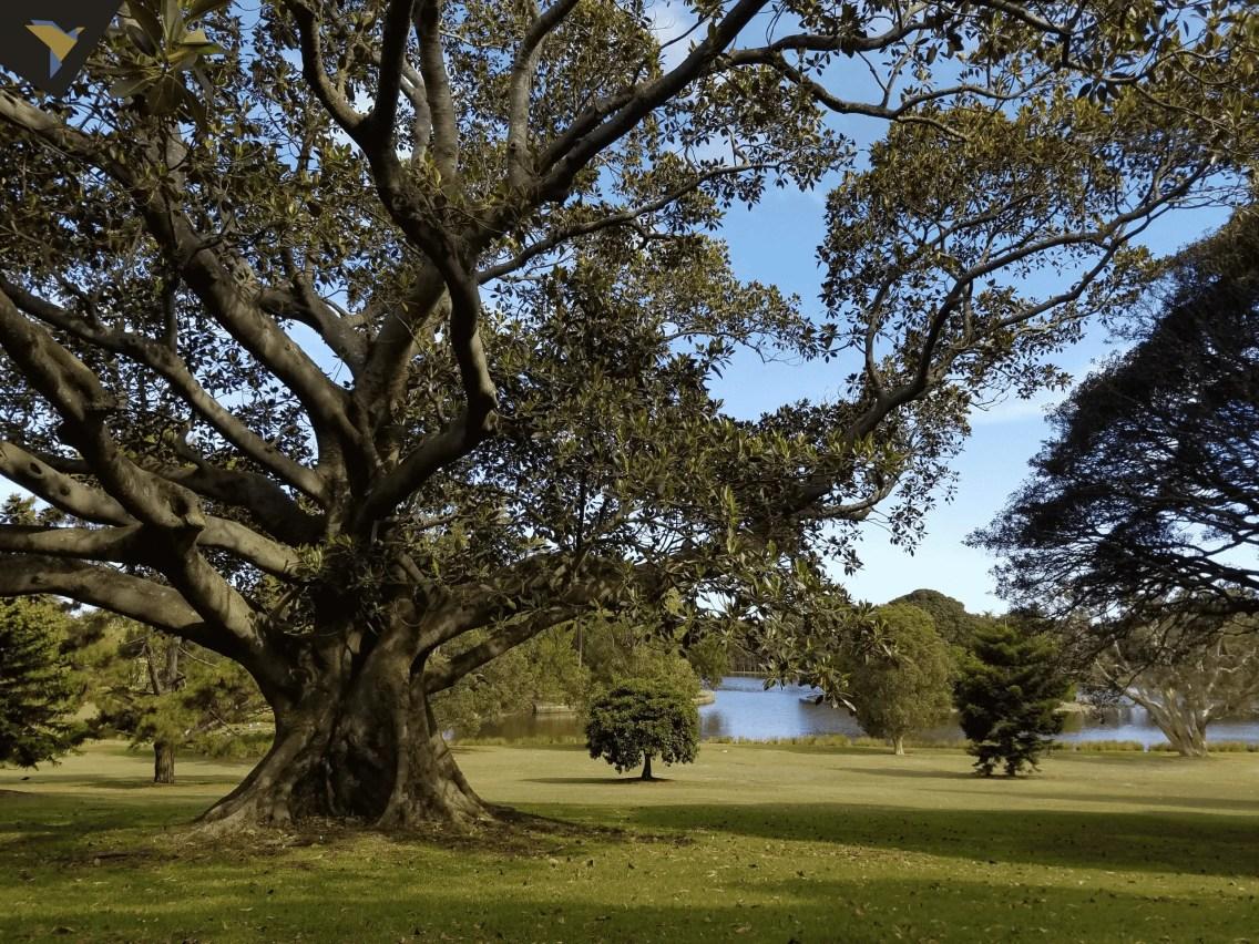 Centenial Park
