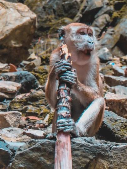 Monos en Batu Caves