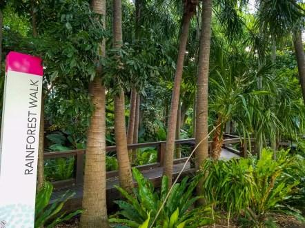 Rainforest Walk Brisbane