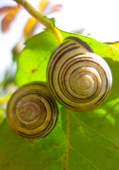 Espirales de evolución