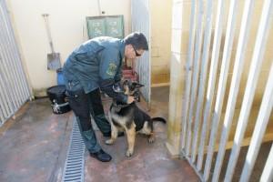 RG100413- REPORTAJE VACUNACION PERROS DE LA GUARDIA CIVIL - SERVICIO CINOLOGICO