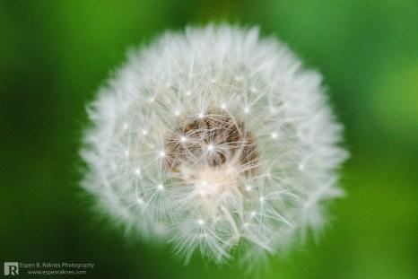 Early in the flowering season