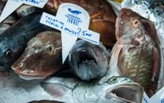 Il pesce dei Galluzzi... eppur si muove