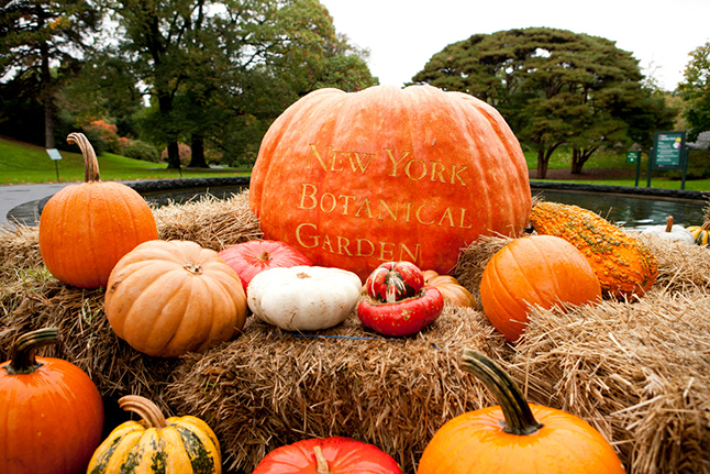 Date Your City | Fall at The New York Botanical Garden