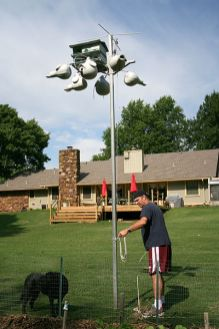 Attracting And Maintaining A Colony Of Purple Martins