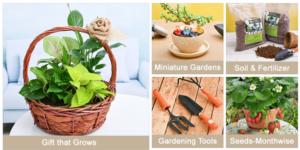 Buy Plants Online Buy Seeds Buy Pots Online