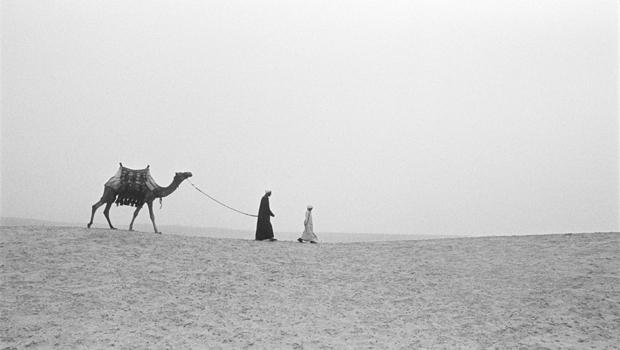 Une promenade en dromadaire en Egypte