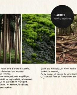arbres japon