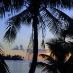 Palmiers sur soleil couchant
