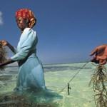 Filet de peche à Zanzibar