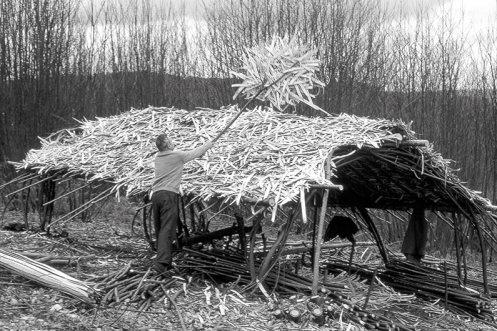 Cabane recouverte de lattes et de copeaux qui s'amoncellent autour du feuillardier pendant qu'il émince les tiges