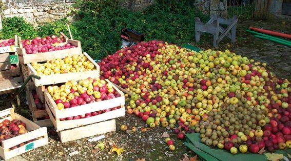 cidre-tas-de-pommes