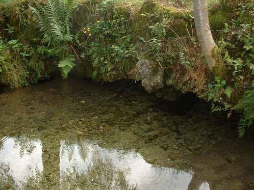 Eaux de source calmes : un habitat naturel pour les larves de salamandre