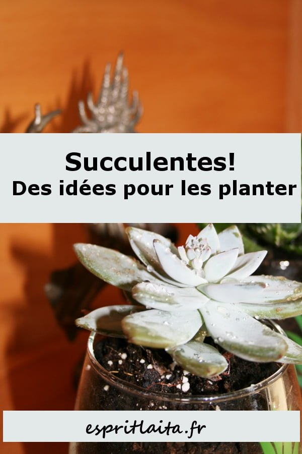 planter des succulentes