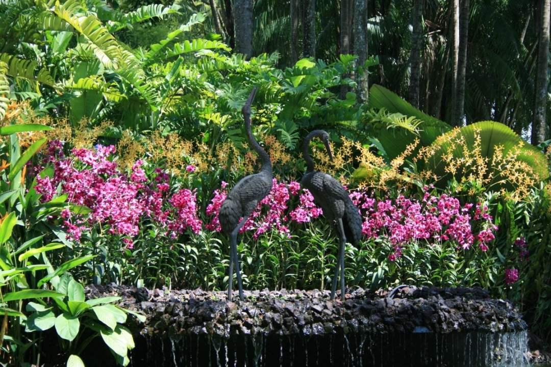 Entretien des orchidées