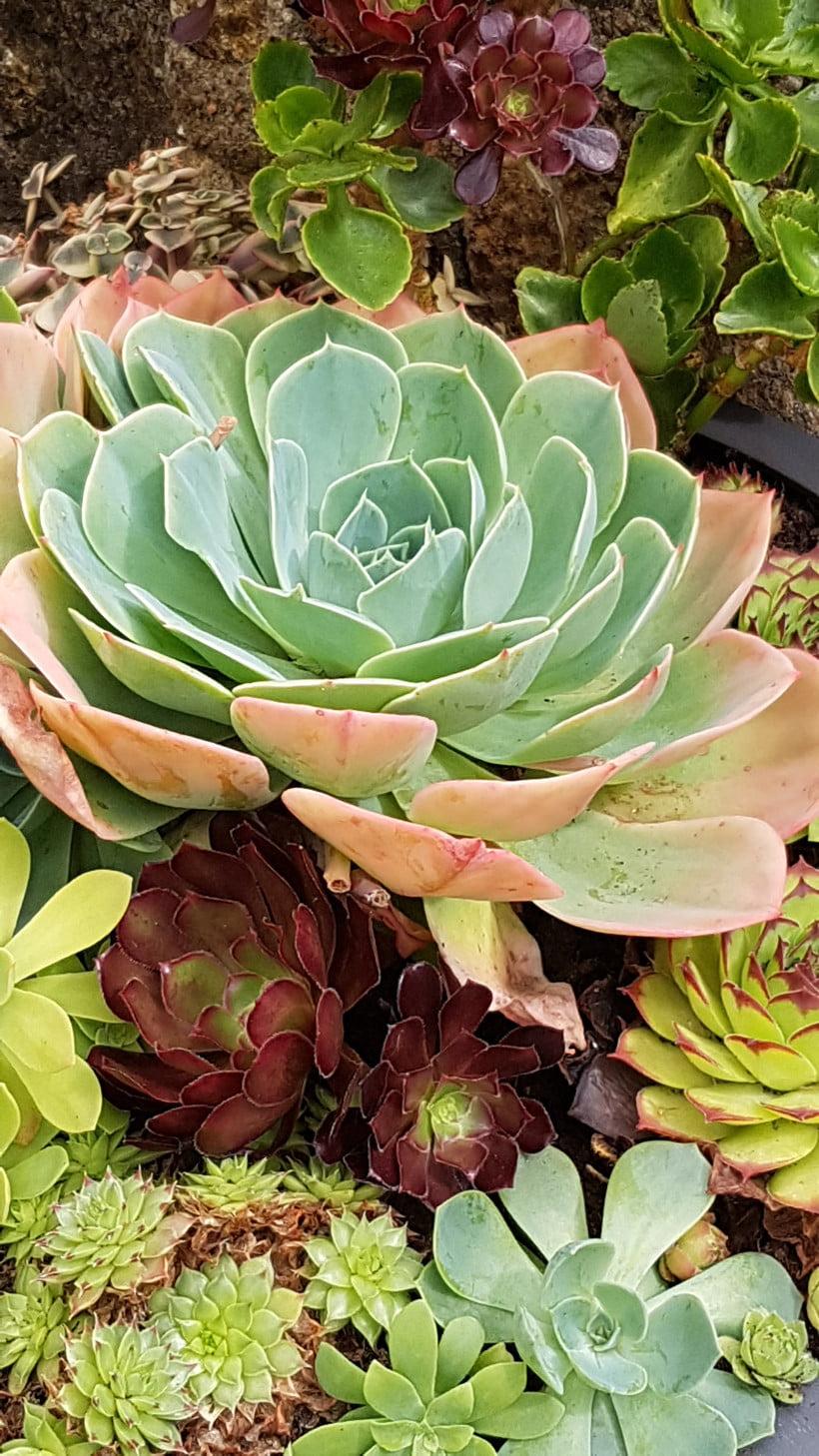 comment faire une composition de succulentes et plantes grasses