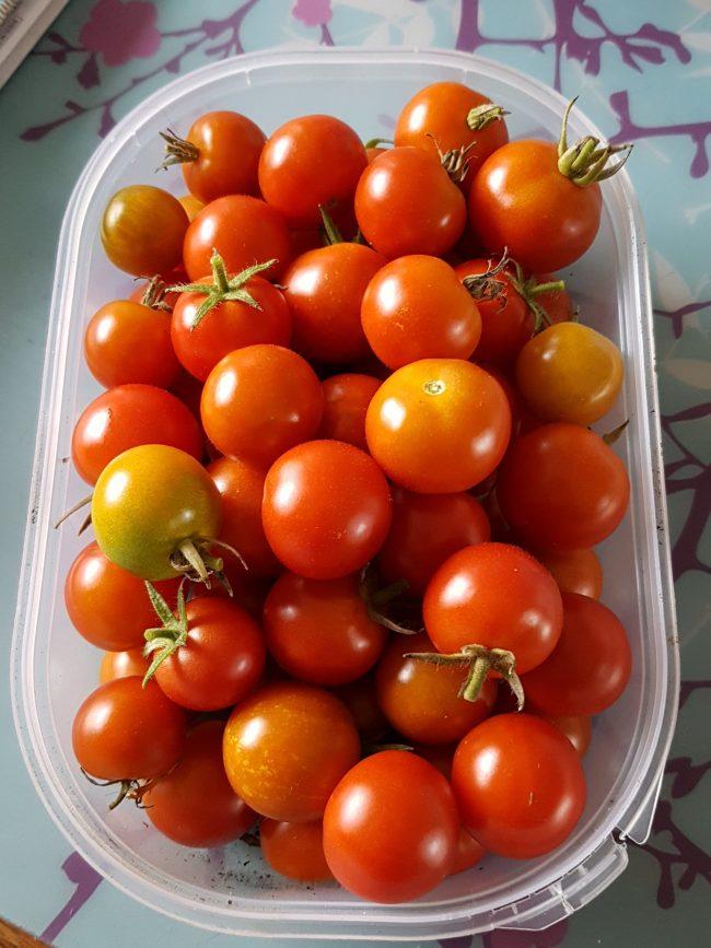 tomates cerises de novembre