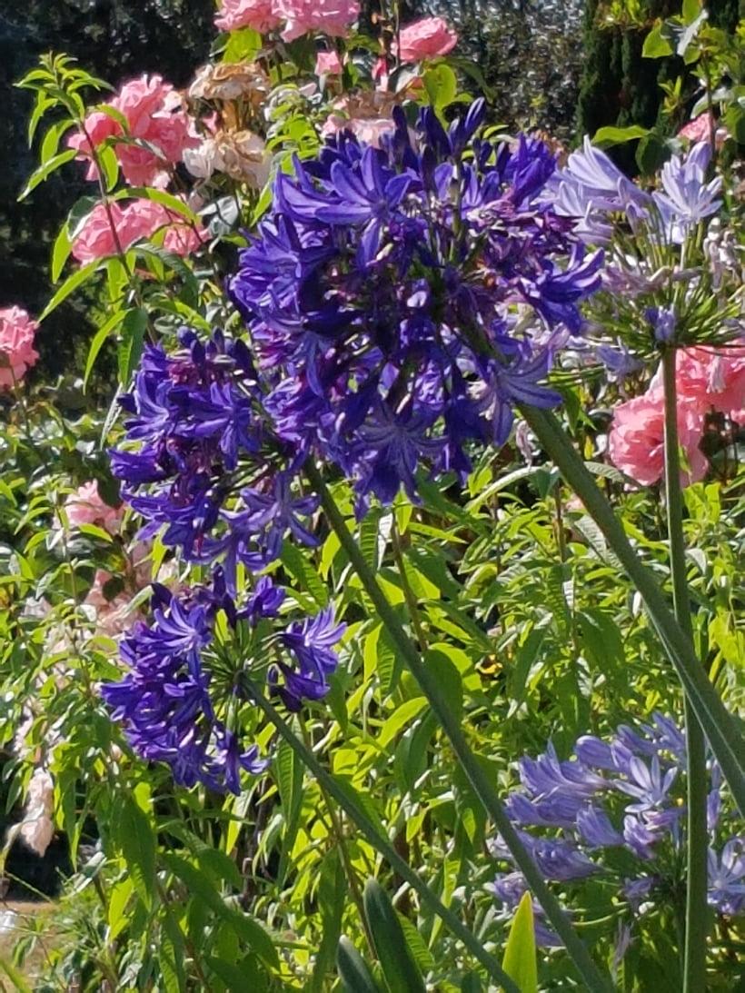 Plante Méditerranéenne Sans Arrosage adapter le jardin au changement climatique: 12 vivaces sans