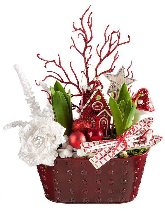 jacinthes de Noël