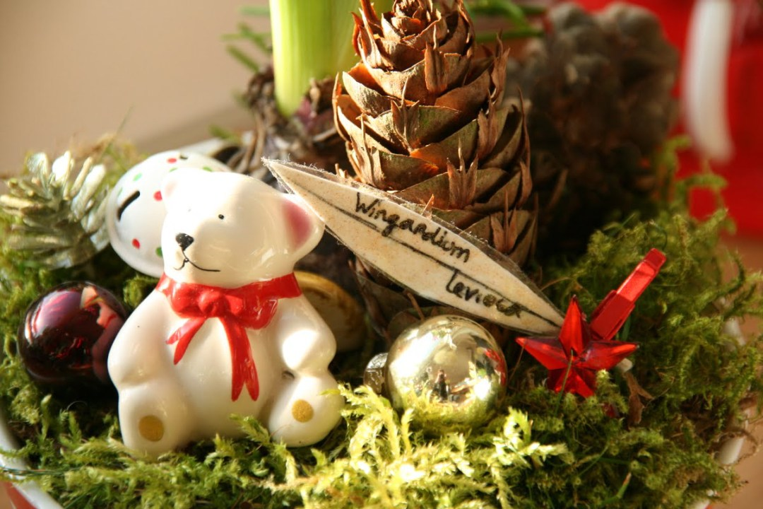 jacinthe de Noël