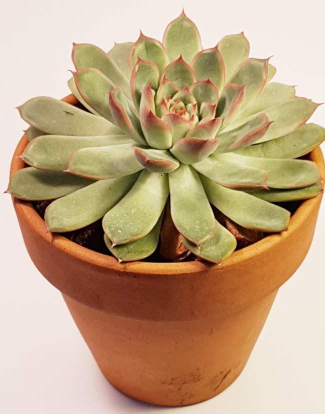 Reconnaitre et nommer les succulantes et les plantes grasses
