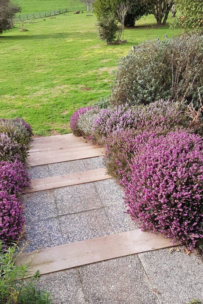 bruyère escalier - Le jardin en Mars