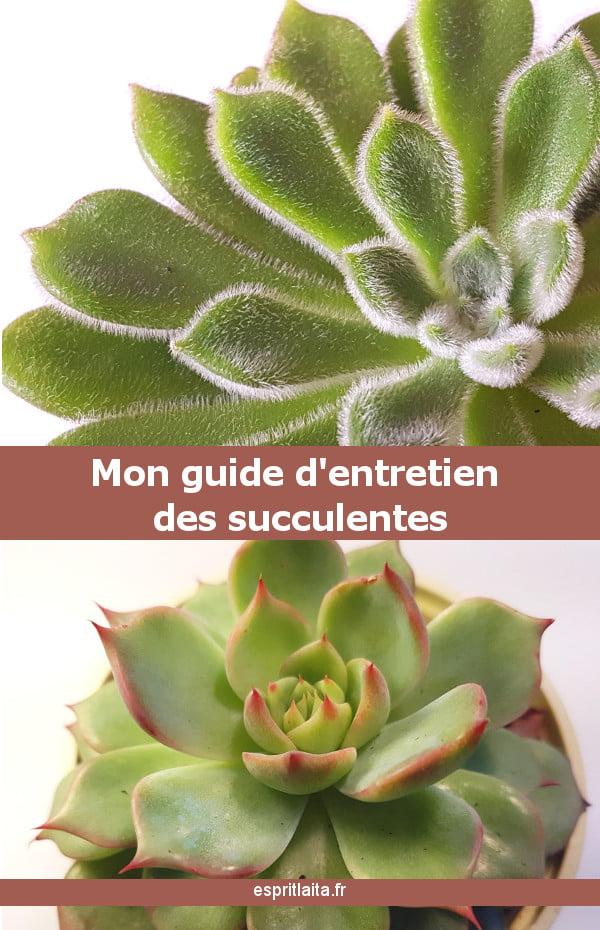 mon guide d'entretien des succulentes et plantes grasses