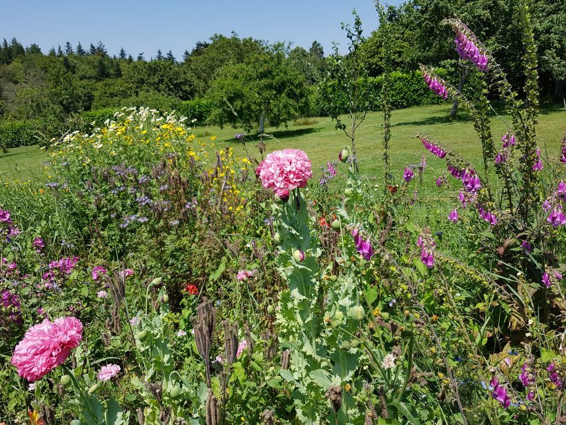 la mini prairie fleurie du jardin d'esprit Laïta
