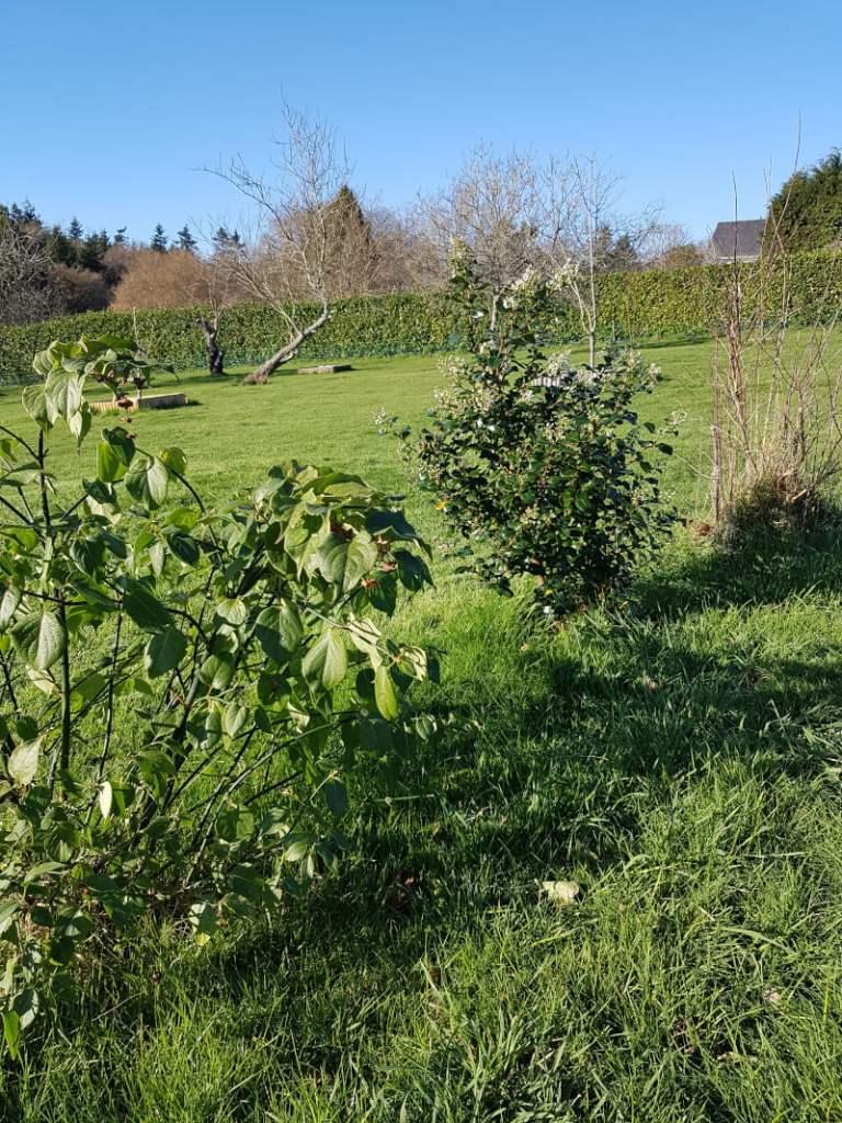 visite du jardin en janvier