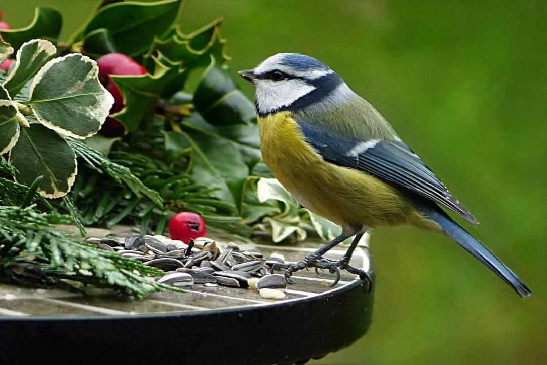 Attirer les oiseaux au jardin