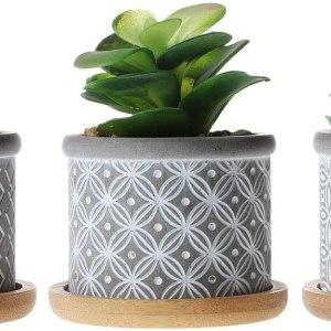 petits pots pour petites plantes