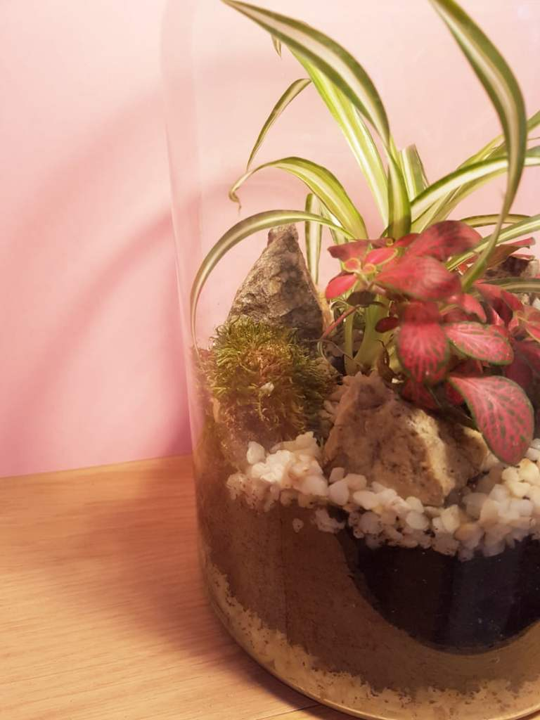 Tuto DIY: le terrarium fait maison terminé