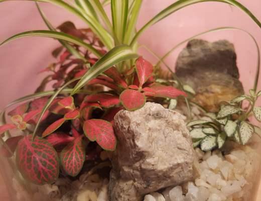 Comment réussir son terrarium