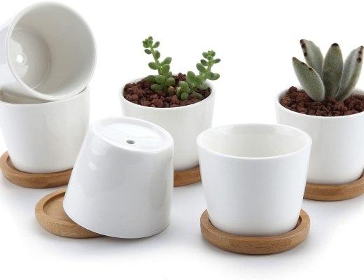 Où trouver ou acheter des petits pots pour petites plantes et succulentes?