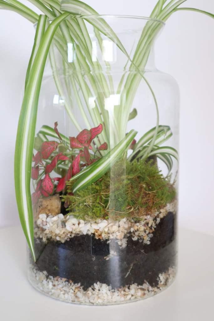 nettoyer et rénover un terrarium de plantes
