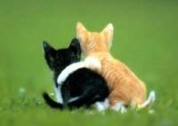 amis chats
