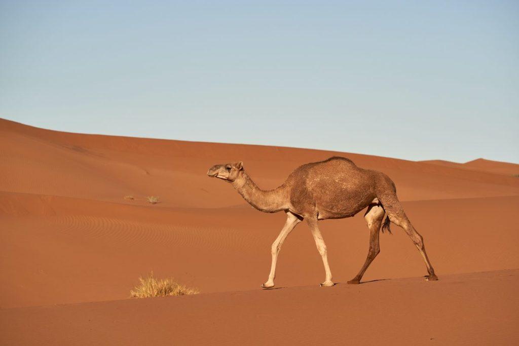 Le camel case qu'est ce que c'est ?