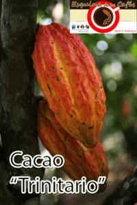 Cacao Trinity