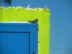 Bird on door