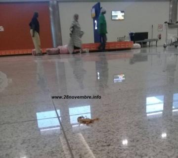 عقرب تسرحُ و تمْرحُ في مطار انواكشوط الدولي
