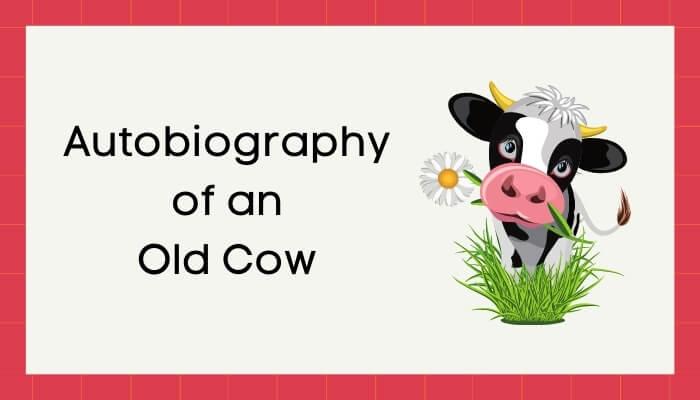 एक बूढ़ी गाय की आत्मकथा हिंदी निबंध - Autobiography of Old Cow Essay in Hindi